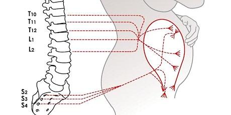 An Osteopathic Approach in Obstetrics, Gynecology, Pulmonology, Cardiology, Gastroenterology, Urology and Geriatrics. tickets