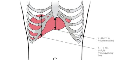 Visceral Osteopathy. Part 1 of 2.