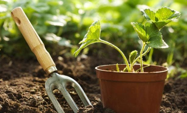 Geo-Farming - Planting Seeds & Growing Your B