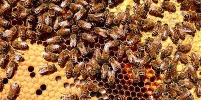 Beekeeping 101: Is Beekeeping For Me?