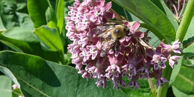 Inviting Bees Into Your Garden