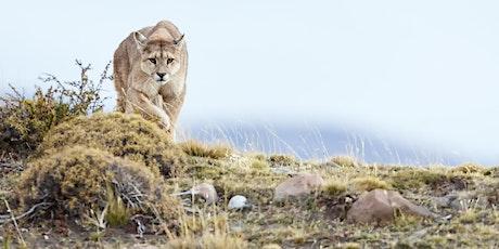 Pumas & Peaks of Patagonia Photo Tour
