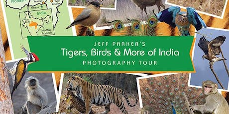 Tigers of India Photo Tour tickets