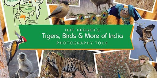 Tigers of India Photo Tour