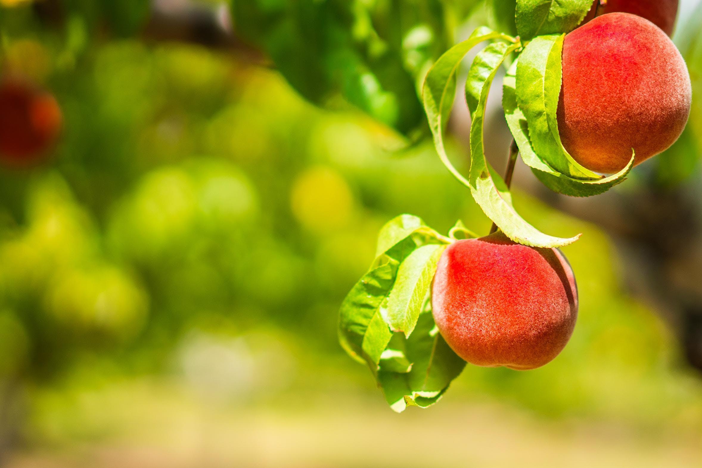 Les clés pour un produit alimentaire bio de q