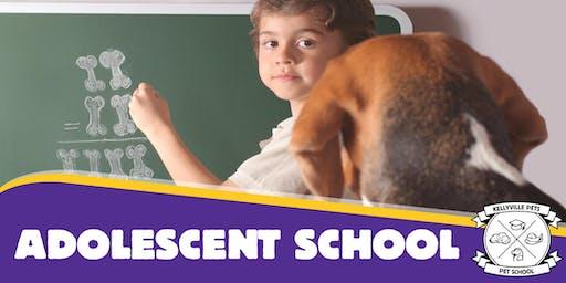 Adolescent Dog School