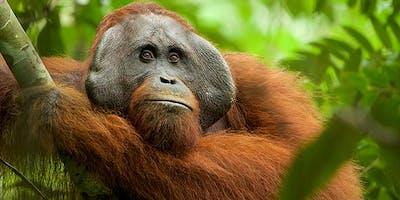 Roots Homeschool - Adventures Among Orangutans (National Geographic Live)