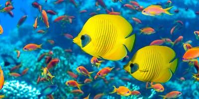 Match & Fish--Cruise Fishing Trip for Singles