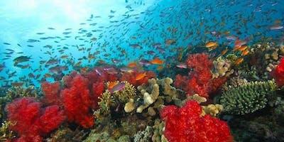 SeeREEF - Reef Ecology Education Foundation
