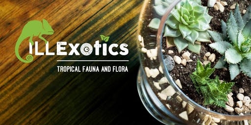 Terrarium Building Workshop at ILLExotics - BYOB