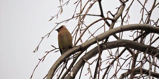 冬季鸟类散步