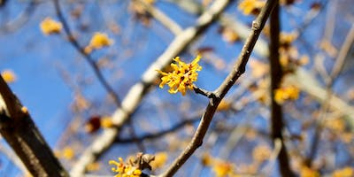 Winter Tree & Shrub Identification and Signs of Spring
