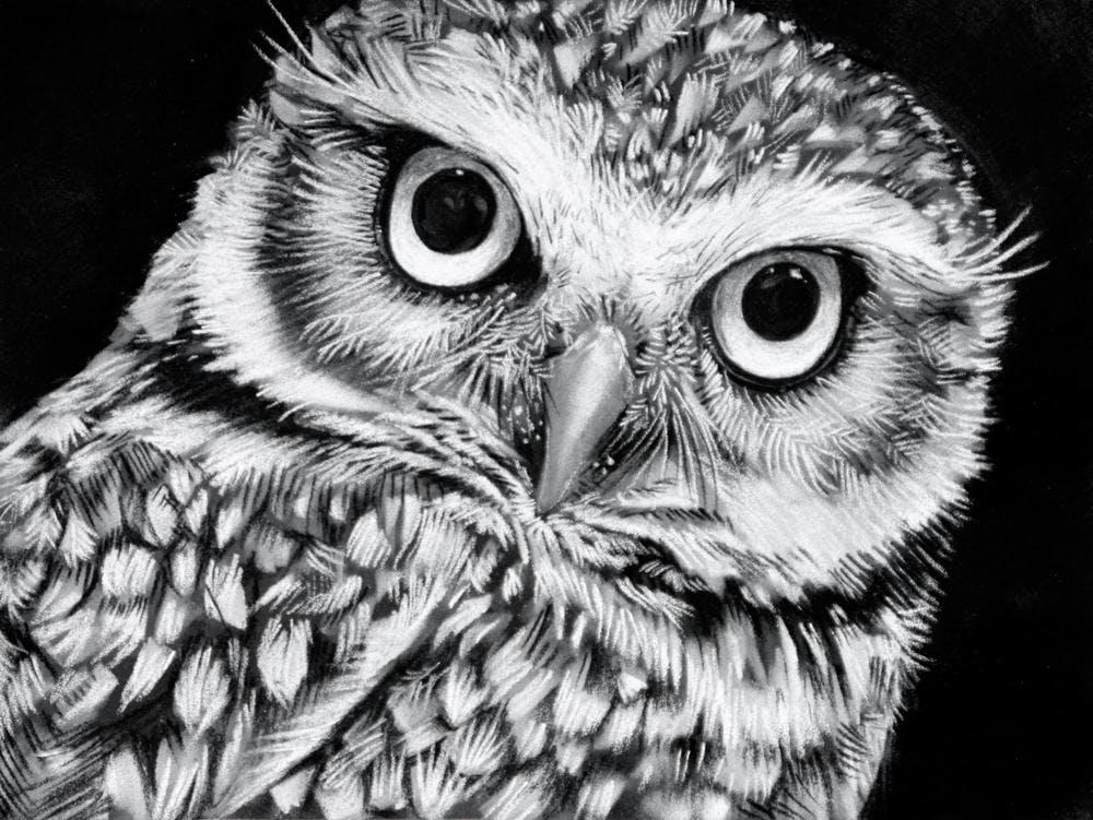 Черно белые картинки карандашом сова