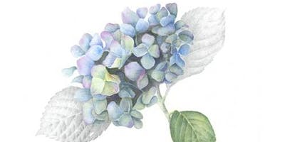Botany for the Colored Pencil Artist