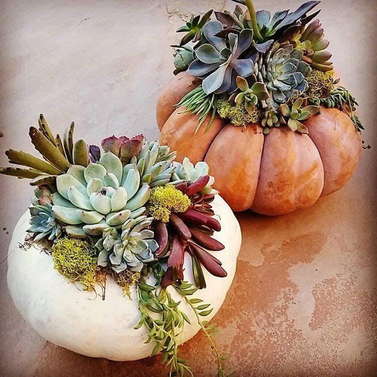 DIY Succulent Pumpkin Workshop