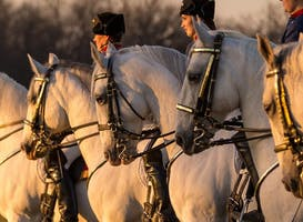 The Tempel Lipizzans: Evening Performance