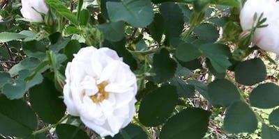 La Plantation Bugnet/the Bugnet Plantation