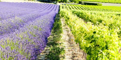 Provence Master Class – Rosé and so much more! With Tanya Morning Star Darling CWE, FWS