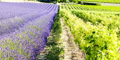 SOLD OUT! Provence Master Class – Rosé and so much more! With Tanya Morning Star Darling CWE, FWS