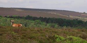 Volunteer Work Day: Blacka Moor Nature Reserve