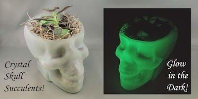Crystal Skull Succulents (Glow in the Dark!) - Rock Shop
