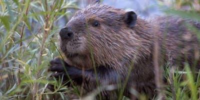 Beaver Translocation Workshop