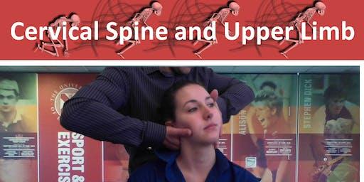 Cervical Spine and Upper Limb