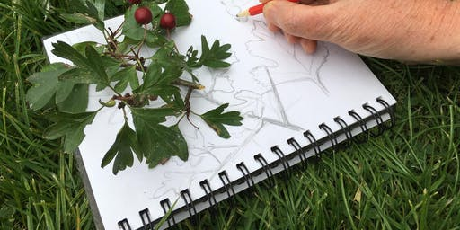 Nature Journaling on the Ashdown Forest