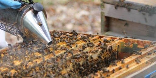 Meet the Bees Workshop