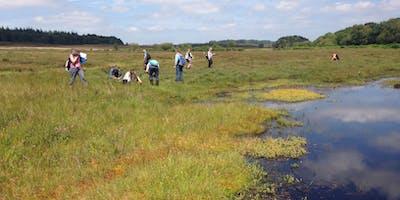 Grasses, Sedges and Rushes - Heathland, Acid Grassland and Bogs