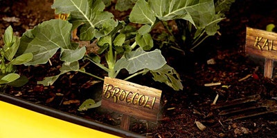 Beginners Guide to Edible School Gardens