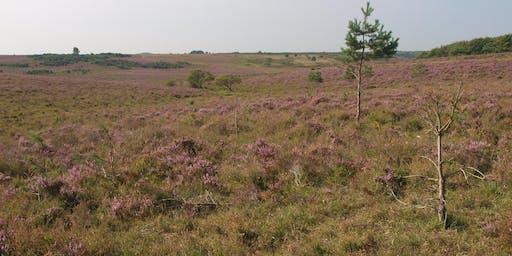 Habitat Indicator Species (Phase 1 and NVC) - Heathland, Acid Grassland and Bogs