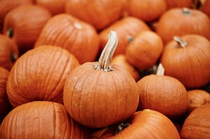 The Best Events for Pumpkin Lovers in NYC This Fall