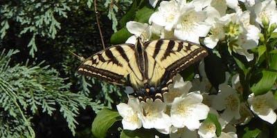 Butterflies & Garden Habitat Presentation