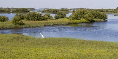 Florida-Friendly Landscaping for Coastal Environments