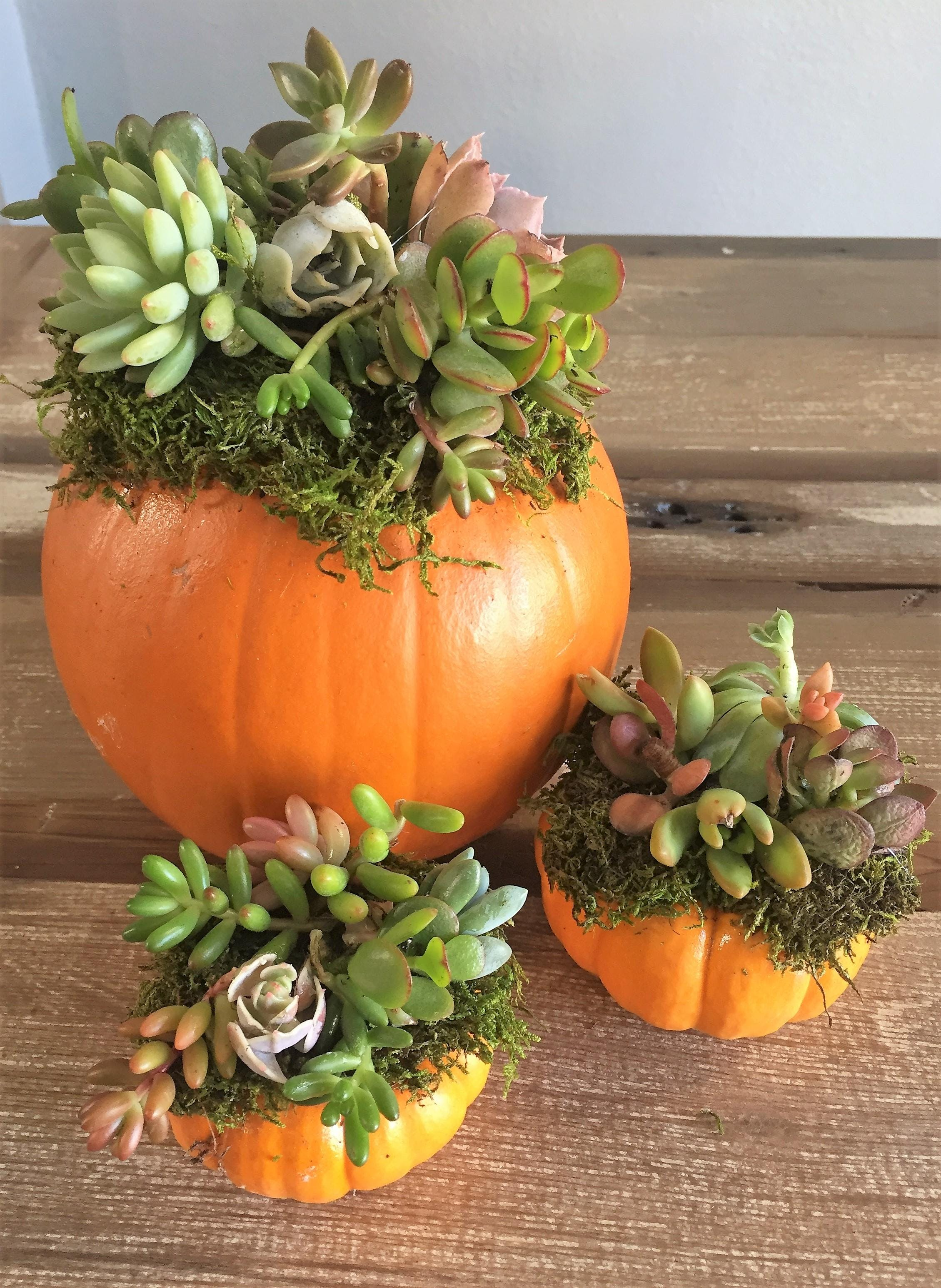 Pumpkin Succulent Arrangement Workshop