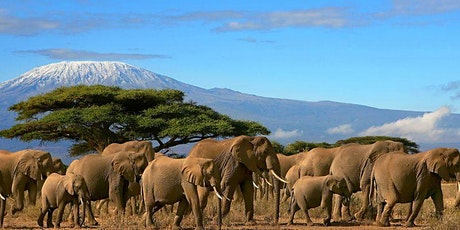 Mt. Kilimanjaro Climb + Music Festival in Tanzania  tickets