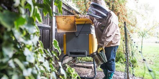 Full Day Bee Keeping