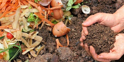 Beginners guide to compost and worms