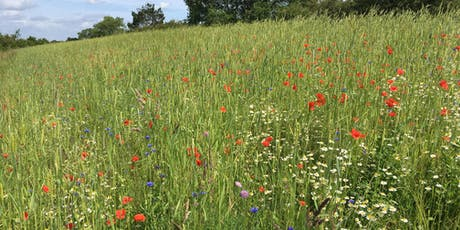 Arable Plant Identification and Ecology tickets