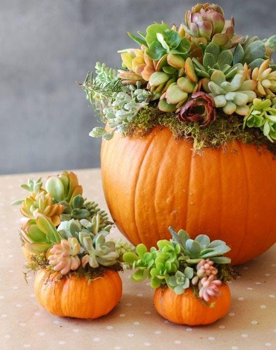 Pumpkin Succulent Centerpiece Class