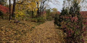 Downsview Park Nature Connection- Fall Nature walk and...