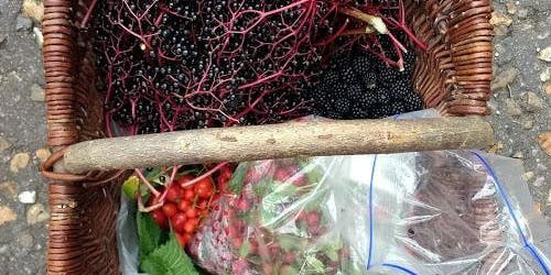 Autumn Wild Food Walk