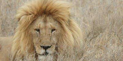 African Safaris