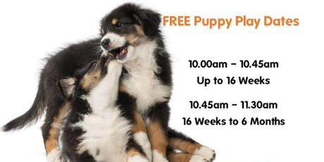 Puppy Play Dates 2019 - (Up To 16 Weeks) tickets