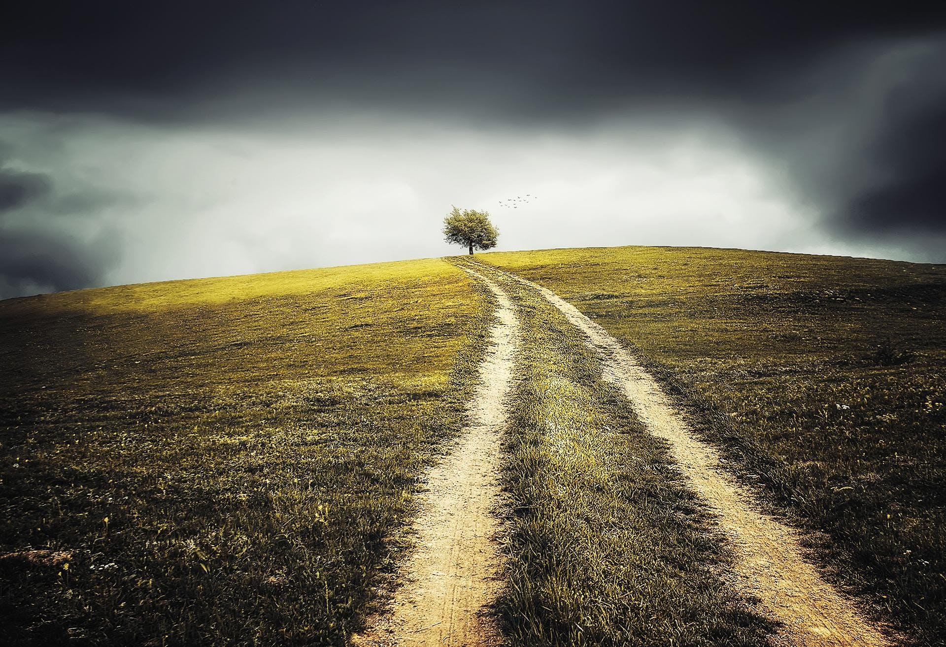 Projections - Le Chemin du bonheur