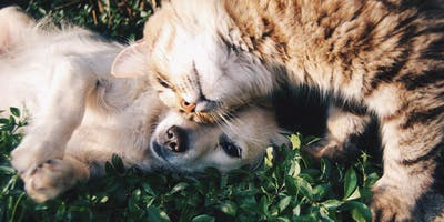 Healthy Pets, Healthy Communities: Low Cost Spay/Neuter Clinics