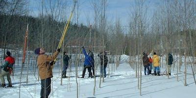 Formation : Taille de formation et élagage des arbres (Cowansville)
