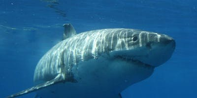 Sharks of the Bay, Sharks of the Sea- What do Sharks have to do with me?