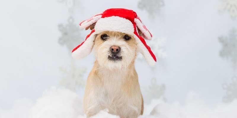 Howliday Pet Photos (Beverly Grove)
